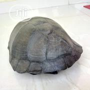 African Tortoise | Reptiles for sale in Lagos State, Ojo