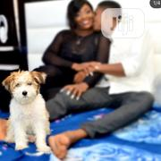 Pet Photography   Photography & Video Services for sale in Lagos State, Amuwo-Odofin
