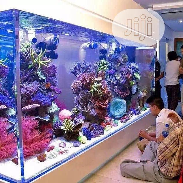 Massive Aquarium