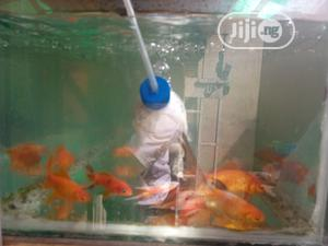 Gold Fish Supply | Fish for sale in Lagos State, Ikoyi