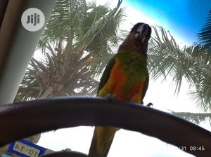 Parrot Trainer | Pet Services for sale in Lagos State, Ikeja