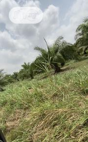 Farm Land At Luga Village Odeda | Land & Plots For Sale for sale in Ogun State, Odeda