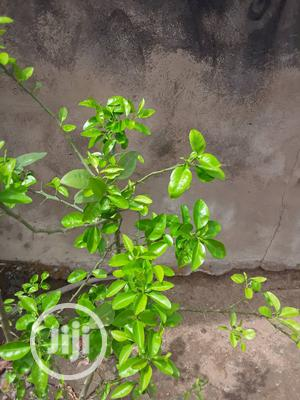 Organic Fertilizer Yes It Is | Feeds, Supplements & Seeds for sale in Abuja (FCT) State, Kuje