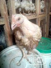 Four Weeks And Above Chickens | Livestock & Poultry for sale in Lagos State, Alimosho