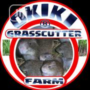 Grasscutter Colonies And Practical @ Okiki Grasscutter Farm   Livestock & Poultry for sale in Kogi State, Lokoja