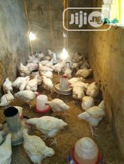 Boiler Chicken | Livestock & Poultry for sale in Lagos State, Alimosho