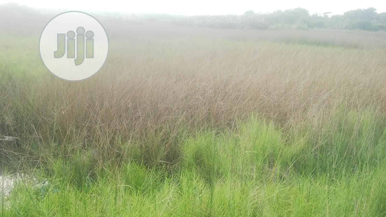 Poultry Land for Sale | Land & Plots For Sale for sale in Ojo, Lagos State, Nigeria