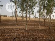 Poll Trees | Garden for sale in Adamawa State, Song