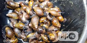 Snails For Sale | Livestock & Poultry for sale in Lagos State, Badagry