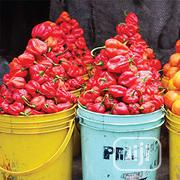Fresh Pepper (Rodo)   Meals & Drinks for sale in Lagos State, Magodo