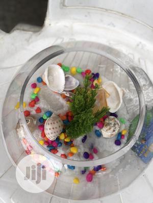 Aquarium Fish Bowl | Fish for sale in Lagos State, Ikoyi