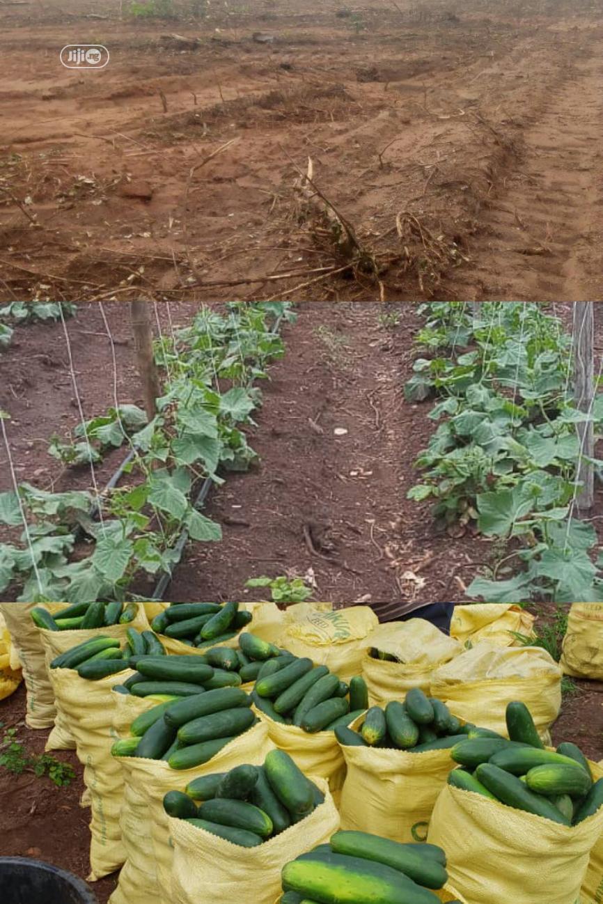 Own 3 Plots Of Land At Siun