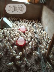 White Cockerels Available For Sale   Livestock & Poultry for sale in Lagos State, Ipaja