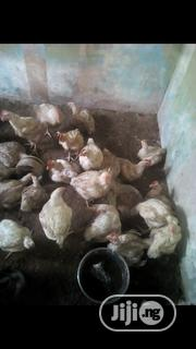 Broilers For Sale | Livestock & Poultry for sale in Lagos State, Alimosho