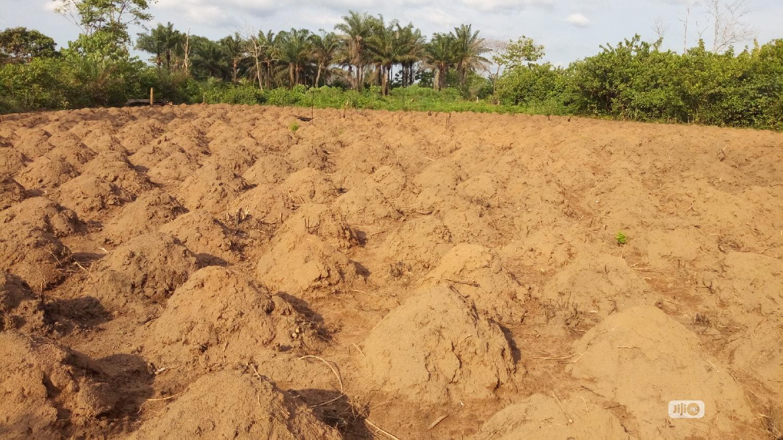 At Nawfija 10 Plots of Land for Sale Melekh Olam Consultium