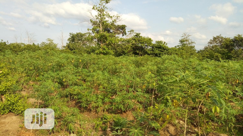 At Nawfija 10 Plots of Land for Sale Melekh Olam Consultium | Land & Plots For Sale for sale in Orumba, Anambra State, Nigeria