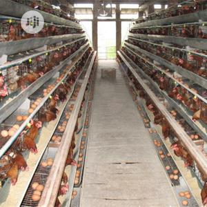 China Factory Best Battery Cage Hot Galvanized Poultry Cage   Farm Machinery & Equipment for sale in Oyo State, Akinyele