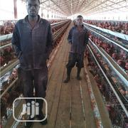 China Factory Hot Dipped Galvanized Battery Cage Quality Poultry Cage | Farm Machinery & Equipment for sale in Kaduna State, Kaduna