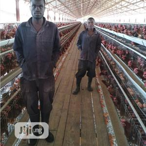 China Factory Hot Dipped Galvanized Battery Cage Quality Poultry Cage | Farm Machinery & Equipment for sale in Kaduna State, Kaduna / Kaduna State