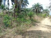 50 Hectares Land for Sale | Land & Plots For Sale for sale in Akwa Ibom State, Etinan