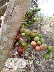 Fig Leaves And Fruits | Meals & Drinks for sale in Oyo State, Ibadan