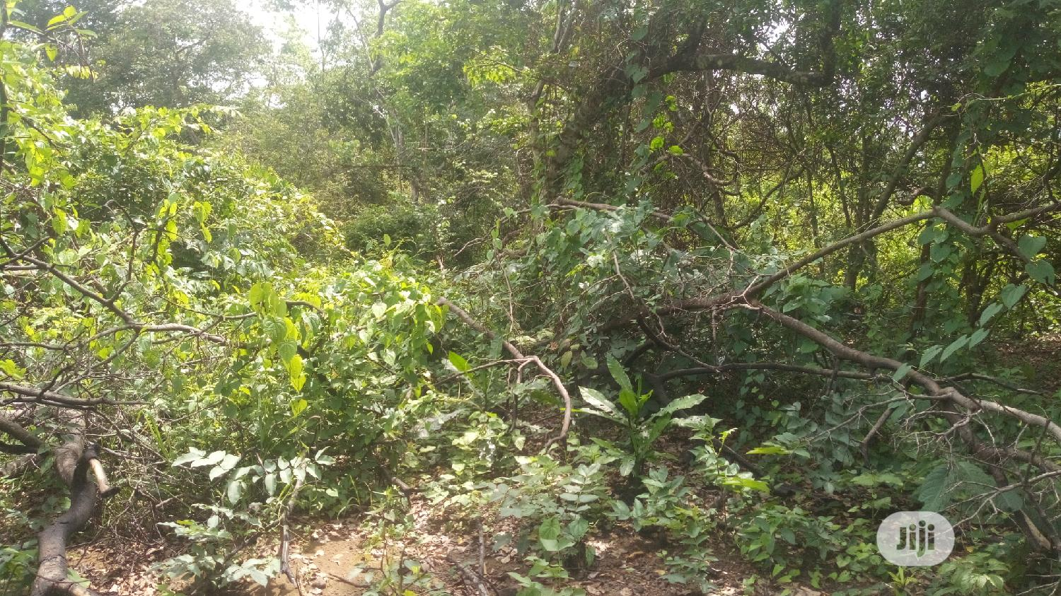 At UFUMA 30 Plots of Land for Sale Melekh Olam Consultium