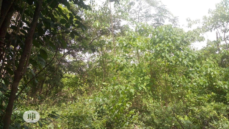 At UFUMA 30 Plots of Land for Sale Melekh Olam Consultium   Land & Plots For Sale for sale in Orumba, Anambra State, Nigeria