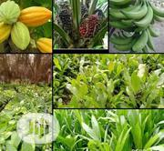 Doaf Green Agro Seedling | Feeds, Supplements & Seeds for sale in Oyo State, Ibadan
