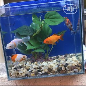 Mini Aquarium   Fish for sale in Lagos State, Lagos Island (Eko)