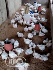 Broiler Turkey | Livestock & Poultry for sale in Lagos State, Ikeja