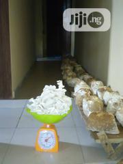 Mushroom (1kg)   Farm Machinery & Equipment for sale in Lagos State, Ikorodu