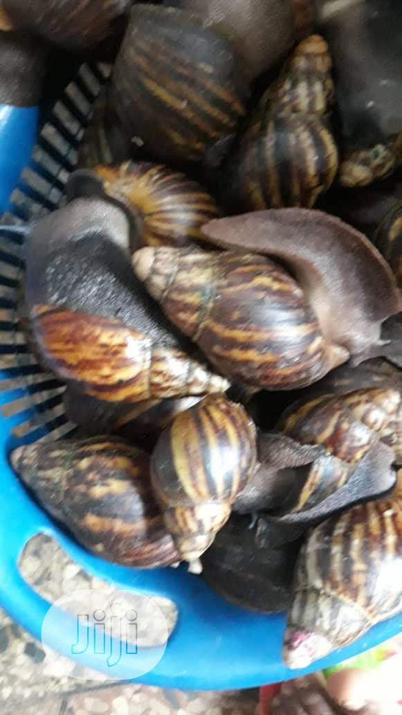 Spicy Snails | Meals & Drinks for sale in Alimosho, Lagos State, Nigeria