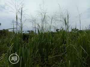 A Plot of Land for Sale   Land & Plots For Sale for sale in Lagos State, Ikorodu