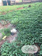 Land for Sell at Dawaki | Land & Plots For Sale for sale in Abuja (FCT) State, Dakwo District