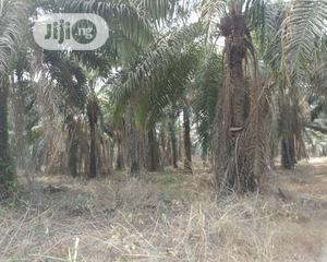 500 Acres of Economic Oilpalm Farm for Sale | Commercial Property For Sale for sale in Oyo State, Lagelu