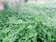 A Plot Of Land For Sale At Alagbado Area Ilorin | Land & Plots For Sale for sale in Kwara State, Ilorin West