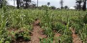 A Plots of Lands for Sale at Rukpokwu Area | Land & Plots For Sale for sale in Rivers State, Port-Harcourt