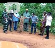 Cassava Stems Tme 419   Feeds, Supplements & Seeds for sale in Ogun State, Ilaro