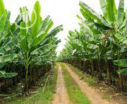 Plantation Managers In Nigeria | Feeds, Supplements & Seeds for sale in Delta State, Udu
