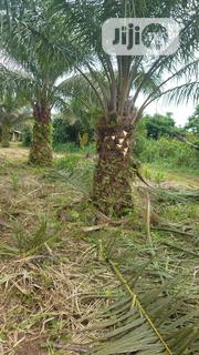 Farm Lands Per Acres | Land & Plots For Sale for sale in Ogun State, Ilaro