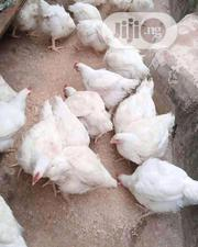 4weeks Old Broilers | Livestock & Poultry for sale in Ondo State, Akure