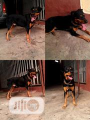 Mating Service Only | Pet Services for sale in Lagos State, Ikotun/Igando