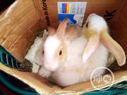 Rabbit Meat | Livestock & Poultry for sale in Lagos State, Yaba