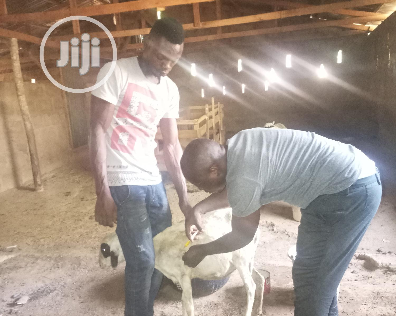 Practical Goat Farming