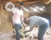 Practical Goat Farming   Classes & Courses for sale in Edo State, Benin City