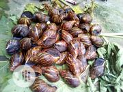Snails(Giant Snails For Consumption)/Maiden Snails For Rearing. | Livestock & Poultry for sale in Lagos State, Alimosho