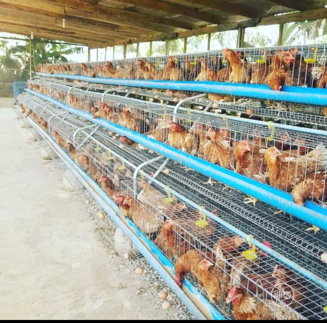 Dekoraj Chicken Battery Cage
