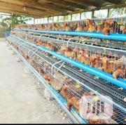 Dekoraj Chicken Battery Cage   Farm Machinery & Equipment for sale in Lagos State, Lekki Phase 1