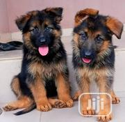 Baby Female Purebred German Shepherd   Dogs & Puppies for sale in Abuja (FCT) State, Central Business Dis