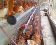 Layers Chicken | Livestock & Poultry for sale in Ogun State, Ado-Odo/Ota